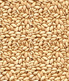 1LB WHITE SESAME SEEDS