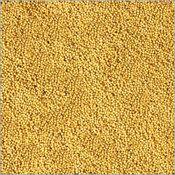 1LB MUSTARD SEEDS WHOLE